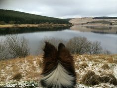 On our walks we sit starring at the views whilst munching on Laughing Dog Treats