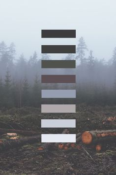 Afbeelding via We Heart It https://weheartit.com/entry/137168242 #colorpalette #forest #gray #grunge #iphonewallpaper #nature