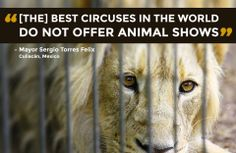 Boycott the circuses that still use animals....