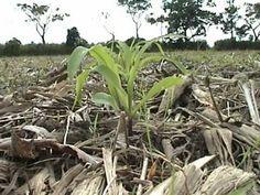 Agricultura de Conservacion . Cero Labranza