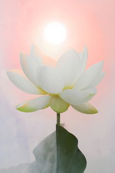 The lotus flower symbolizes the progression of the soul. It inspires one to rise from the darkness and persevere.