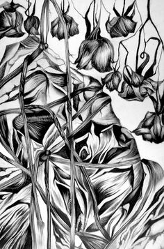 Organic Forms Illustrations