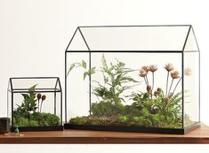 Despite the recent terrarium craze, I still haven't created or bought one for my own home. This rather affordable easy-on-the-eyes greenhouse is tempting me to finally write it into my to-do …