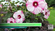 Proven Winners® Gardener Channel: Proven Winners® Must-Have Perennials