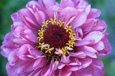Flowers within a Flower by Beth Taylor
