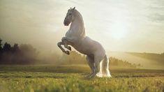 2156262848 white horse in field nature hd wallpaper Jgo MM 78 Horse Wallpaper, Animal Wallpaper, Photo Wallpaper, Hd Wallpaper, Computer Wallpaper, Beautiful Horses, Animals Beautiful, Cute Animals, Majestic Horse