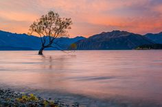 The 'Wanaka Tree' is one of the most photographed places in New Zealand. It's easy to see why. Day Hike, Day Trip, Adventure Tours, Adventure Travel, Great Walks, Milford Sound, Hiking Tours, South Island, Heritage Site