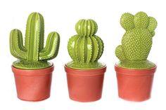 Cactus, tendenza arredamento 2017 - Cactus mignon