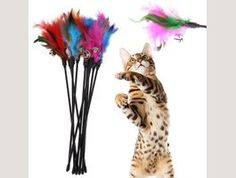 Cat Toys Soft Colorful Feather Bell Rod Toy for Kitten Funny Playing Kittens Playing, Cats And Kittens, Pet Ball, Colorful Feathers, Interactive Toys, Cat Toys, Wands, Pet Supplies