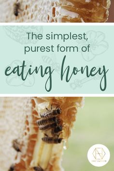 Honeycomb (beeswax) is a natural wax produced by honey bees and is edible. Honey in the comb is the most simple and purest form of eating honey and has been so for thousands of years. Visit our website and find out for yourself. We're offering 20% off your first order if you sign up to our newsletter too.  #honey #luxuryhoney #redgumhoney  #nectahive #wellbeing Raw Honey, Honey Bees, Australian Honey, Best Honey, Sugar Substitute, Honey Benefits, Health Benefits, Muesli, Health And Wellbeing