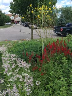 Rain Garden, Gardening Tips, Gardens, Building, Plants, Pictures, Photos, Buildings, Garden