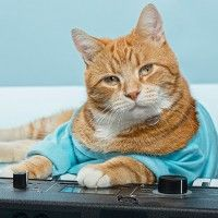#dogalize Keyboard Cat – The most talented cat in the Internet #dogs #cats #pets