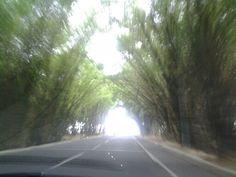 Túnel de bambú na chegada ao aeroporto de Salvador.
