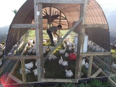 1000 Images About Chicken Coops On Pinterest Chicken