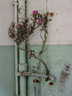 "From ""blumen ohne wasser (Flowers without water)"" series by German photographer Maria Grossmann, in collaboration with Monika Schürle. Nice contrast of nature vs. Man Vs Nature, Bloom, Natural Forms, Wabi Sabi, Candle Sconces, Ladder Decor, Wall Lights, Colours, Pretty"