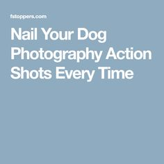 Nail Your Dog Photography Action Shots Every Time