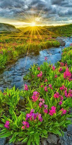 "Alpine Primrose by Igor Menaker, via San Juan mountains, Colorado. ""Alpine Primrose"" by Igor Menaker, via Beautiful Nature Pictures, Amazing Nature, Nature Photos, Beautiful Landscapes, Beautiful World, Beautiful Flowers, Beautiful Places, Foto Picture, Landscape Photography"