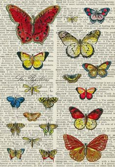 Butterfly wall, Butterflies and Wall decorations