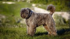 Best Hypoallergenic Dog Breeds: 20 Different Breeds That Don't Shed Best Big Dog Breeds, Smartest Dog Breeds, Dog Breeds List, Puppy Images, Cute Puppy Pictures, Teacup Puppies For Sale, Cute Puppies, Teacup Dog Breeds, Best Hypoallergenic Dogs