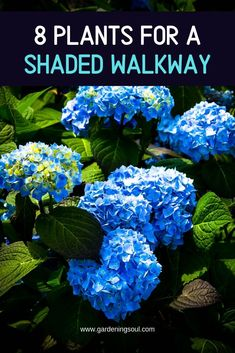 8 Plants for a Shaded Walkway Fence Landscaping, Backyard Fences, Backyard Projects, Garden Trellis, Garden Planters, Planting Shrubs, Planting Flowers, Small Water Features, Gardening Photography