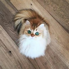 Fluffy kitten with beautiful eyes