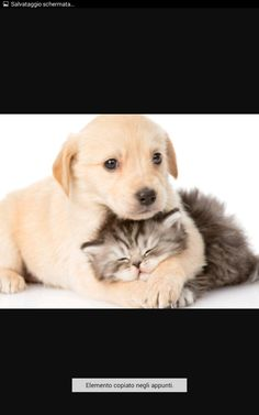 Wallpaper puppy retriever kitty cat cats dogs 2 sleep animals kittens two. Kittens And Puppies, Cute Kittens, Cute Puppies, Cats And Kittens, Bulldog Puppies, Golden Retriever, Labrador Retrievers, Retriever Puppy, Labrador Dogs