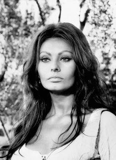 Sophia Loren - Summers in Hollywood Timeless Beauty, Classic Beauty, Divas, Sophia Loren Images, Old Movie Stars, Italian Actress, Celebs, Celebrities, Hollywood Stars