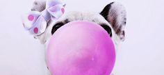 VK Blog ®: Ο σκύλος μου έφαγε τσίχλα! Τι να κάνω