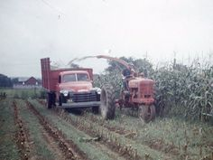 Chopping corn for silage Antique Tractors, Vintage Tractors, Vintage Farm, Farmall Tractors, Ford Tractors, Tractor Pictures, Combine Harvester, Agriculture Farming, Old Farm Equipment
