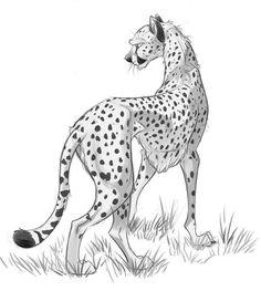 Cheetah Study by dodgyrom on DeviantArt Cheetah Drawing, Cat Drawing, Drawing Stuff, Animal Sketches, Animal Drawings, Art Sketches, Storyboard, Cartoon Drawings, Cool Drawings
