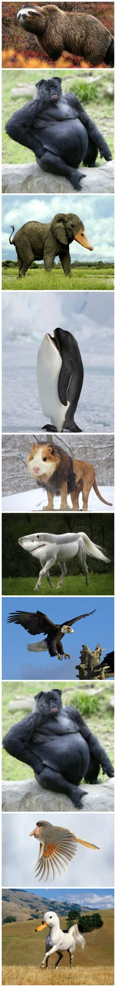 Crazy animal mashups - the dog and killer whale are the best! Animals And Pets, Baby Animals, Funny Animals, Cute Animals, Animal Mashups, Animal Memes, Funny Cute, The Funny, Photoshopped Animals