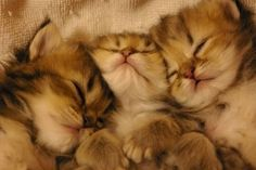 Cute kittens. Sleep is good. Staying up can be trouble. Getting into everything.