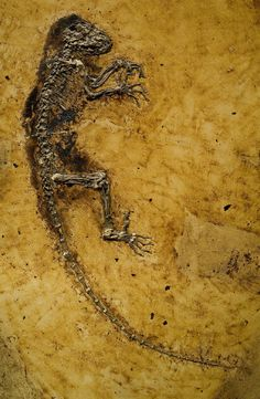 Fosiles congelados yahoo dating
