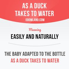 """""""As a duck takes to water"""" means """"easily and naturally"""". Example: The baby adapted to the bottle as a duck takes to water. #idiom #idioms #saying #sayings #phrase #phrases #expression #expressions #english #englishlanguage #learnenglish #studyenglish #language #vocabulary #dictionary #grammar #efl #esl #tesl #tefl #toefl #ielts #toeic #englishlearning"""
