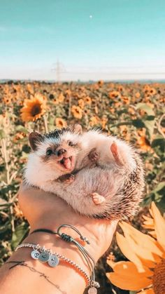 Baby Farm Animals, Cute Wild Animals, Baby Animals Super Cute, Cute Baby Dogs, Pretty Animals, Baby Animals Pictures, Cute Dogs And Puppies, Cute Little Animals, Cute Animal Pictures