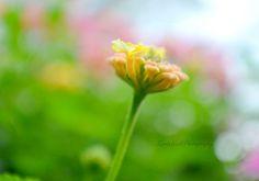 ~ a Garden for Glenda ~ by Nicky on Etsy