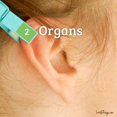 clothespin ear reflexology chart This ear reflexology is so easy to do and can make a large difference in your day Sinus Pressure, Infection Des Sinus, Ear Reflexology, Acupuncture Benefits, Stomach Problems, How To Relieve Stress, Back Pain, Pain Relief, Full Body
