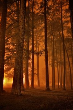 Fog Forest, Athens, Alabama photo via earthy