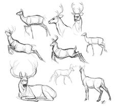 Animal Sketches, Art Drawings Sketches, Animal Drawings, Anatomy Sketches, Anatomy Drawing, Deer Drawing, Painting & Drawing, Rabbit Drawing, Hirsch Design