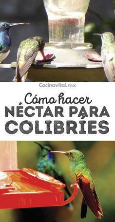 Eco Garden, Gardening Tips, Pallet Gardening, Gardening Gloves, Flower Gardening, Back Gardens, Succulents Garden, Garden Inspiration, Bird Houses