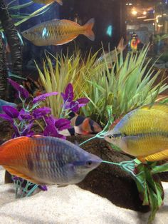 kemah+aquarium | Kemah, Texas Aquarium.