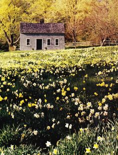 the years of autumn planting, and winter waiting, become springs filled with daffodils. a sea of beautiful gold and white daffodils. Mexican Hacienda, Felder, Cabins And Cottages, Cabins In The Woods, Mellow Yellow, Country Life, Country Living, Daffodils, The Great Outdoors