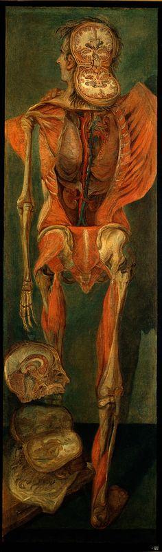 La anatomía en una sola imagen.