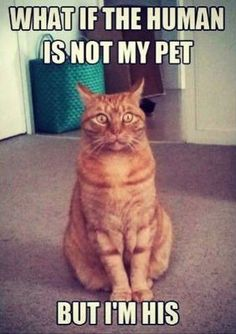 funny cat meme featuring an orange tabby cat