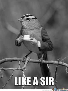 Get 3 #freesamples of TeaMonger #Tea!