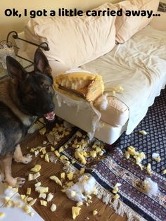 Leave your German Shepherd alone at your own risk.