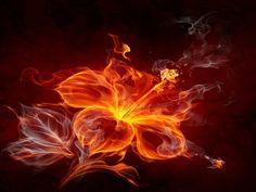 Fire Flower Maybe a tattoo idea