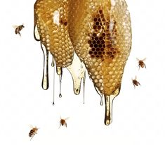Items similar to Original square fine art photo photograph print of Honey dripping out of honeycomb with bees flying, various sizes available. on Etsy Honey Bee Tattoo, Photo Food, Raising Bees, Grafiti, Local Honey, Bee Happy, Save The Bees, Fine Art Photo, Milk And Honey