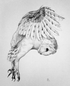 Owl Tattoo Drawings, Bird Drawings, Animal Drawings, Tattoo Bird, Tattoo Small, Tattoo Sketches, Owl Tattoo Design, Tattoo Designs, Owl Art