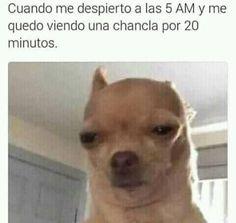 Mantente al tanto de la tendencia #SiMiCelularHablara y ve los mejores memes. http://mexico.srtrendingtopic.com/trend/79328/2016-10-12/2016-10-18/simicelularhablara.html